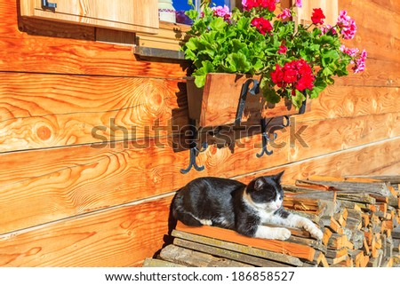 Black and white cat rests in sun on porch of alpine house, Sassolungo, Dolomites Mountains, Italy