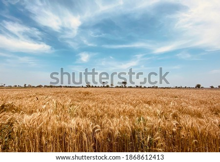 Beautiful Landscape Of The Country Side