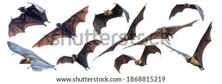 Set of flying bats isolated on white background Royalty-Free Stock Photo #1868815219
