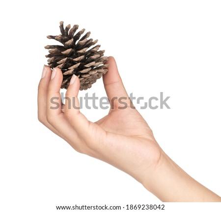 hand holding Pinecone isolated on white background Royalty-Free Stock Photo #1869238042
