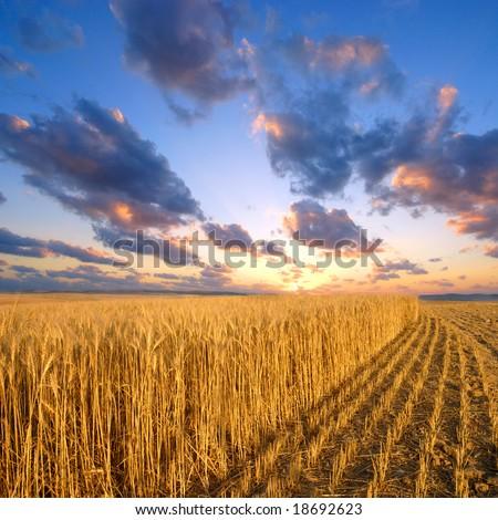 rural landscape #18692623