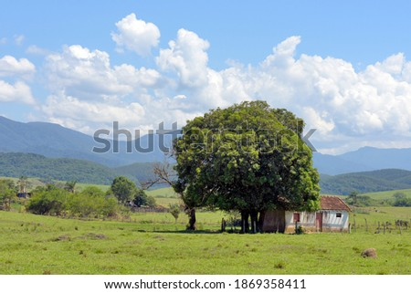 Rural landscape: mango tree in front of a simple house, typical of rural Brazil, with hills and cumulus clouds in the background Royalty-Free Stock Photo #1869358411