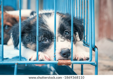 Cute puppies in a cage at an animal shelter. Dog shelter. Royalty-Free Stock Photo #1869368110