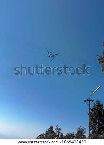 picture of pine tree's branch stuck on electricity wires under open sky