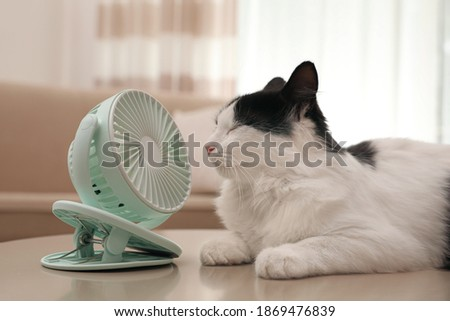 Cute fluffy cat enjoying air flow from fan on table indoors. Summer heat Royalty-Free Stock Photo #1869476839