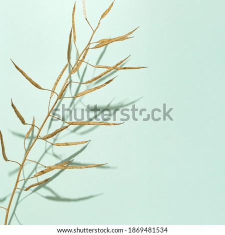 Dry grass golden colored on light background or screensaver. Minimal nature concept.