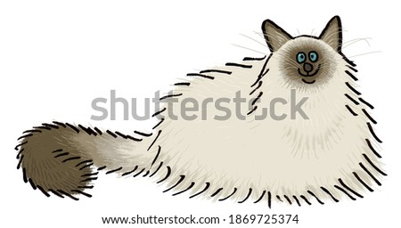 Birman cat breed cat illustration