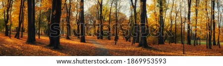 bright colors of October. beautiful wide panoramic view of a deserted autumn city park with a lawn under fallen leaves and a pedestrian path between tall trees
