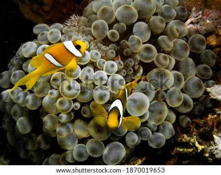 Underwater photography of a liveaboard diving trip in the Red Sea (Egypt)