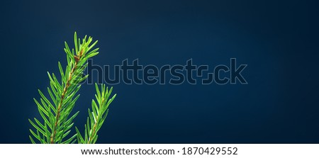 Spruce branch. Fresh green young sprouts of spruce on a blue background with copy space. Royalty-Free Stock Photo #1870429552