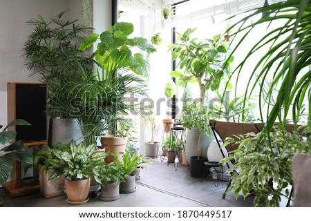 Houseplants in different designed flowerpots Royalty-Free Stock Photo #1870449517