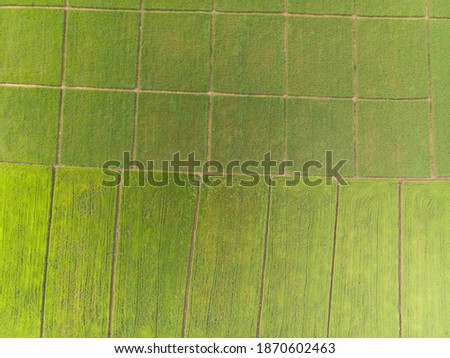 Photos of green rice fields Aerial shot of drone. Patterns of rice fields During cultivation in Asia.