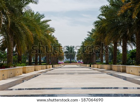 beautiful park with palm trees in Abu Dhabi #187064690