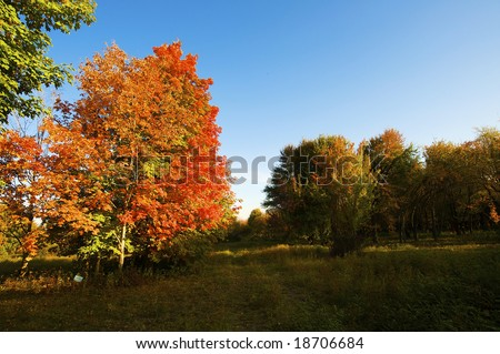 Autumnal trees on the sunset into dendra  park #18706684