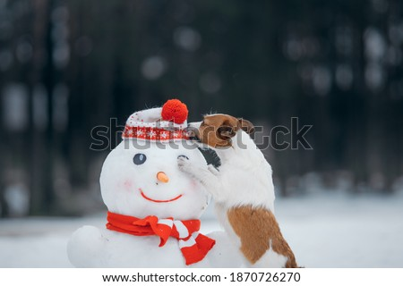 dog in snowy winter makes a snowman. Jack Russell Terrier in a scarf. Pet in nature Royalty-Free Stock Photo #1870726270