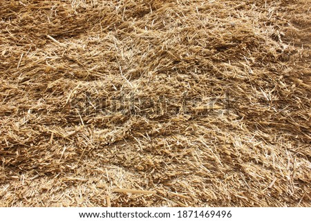 Pile of dry chaff in Punjab, Pakistan,  dry wheat crop residues to be used as animal feed or fodder, The concept of hay storage #1871469496
