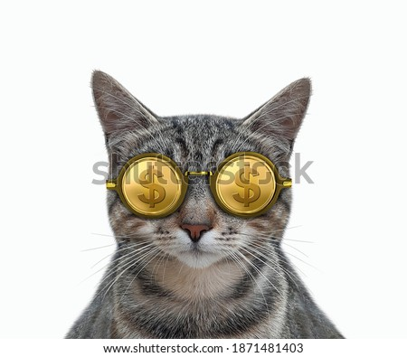 A gray cat is wearing cool american gold dollar glasses. White background. Isolated.