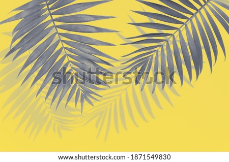 Illuminating yellow and ultimate gray - trendy colors of the year 2021. Vivid abstract background with grey palm leaves and copy space for text. Tropical concept and design element.