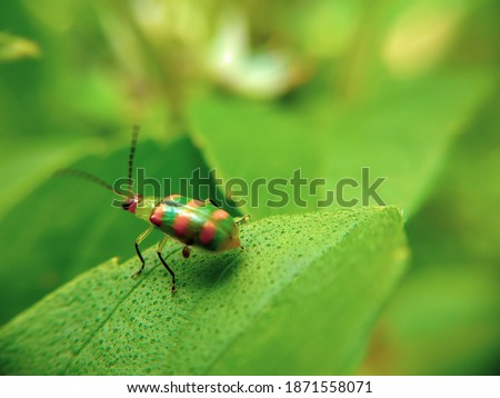 little green ladybug eating leaves in the garden and photo captured with selective focus