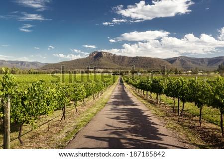 View of Hunter Valley vineyards, NSW, Australia Royalty-Free Stock Photo #187185842