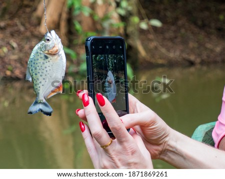 Pictures of small piranha catch from Amazon River, Brazil. Amazonia. South America