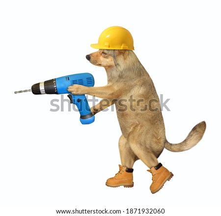 A dog worker in a yellow construction helmet is holding a blue hand electric drill. White background. Isolated.