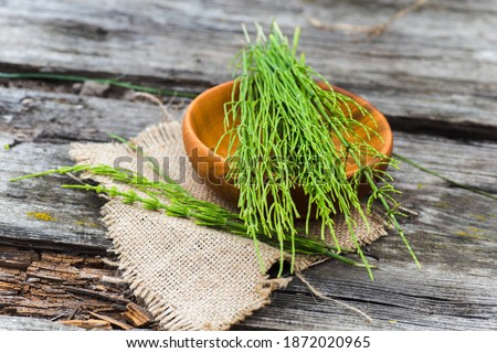Equisetum arvense, field horsetail or common horsetail Medicinal plants collected for the preparation of traditional medicine Royalty-Free Stock Photo #1872020965