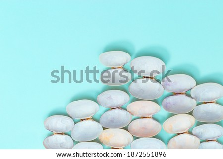 White and soft pink shells on turquoise color paper. Summer design background with natural beautiful seashells with copy space