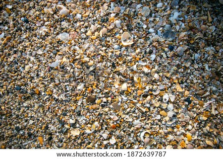 Seashell pictures on the beach where many types of seashells are mixed on the beach are beautiful live wallpapers.