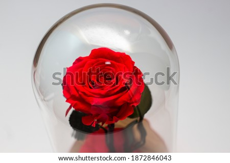 Forever rose is a beautyful symbol.
