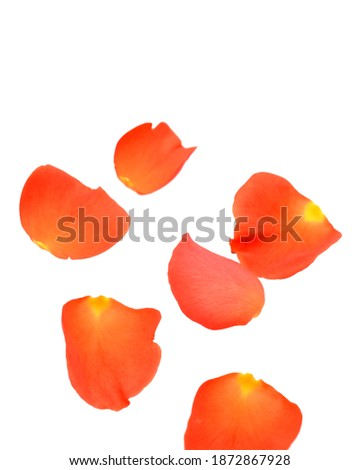 A fresh rose petals on white