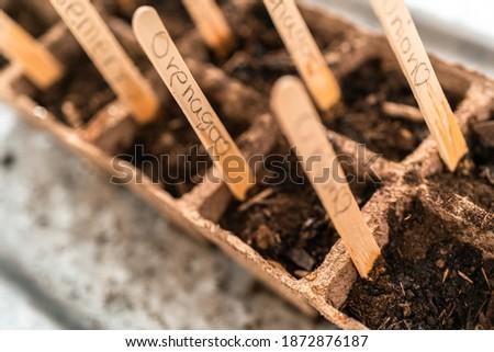 Planting seeds into peat moss pots to start an indoor vegetable garden.