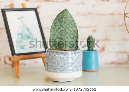 Whale Fin Plant (Sanseviera masoniana) with drawn picture on small easle against red brick wallpaper and little cactus in the background