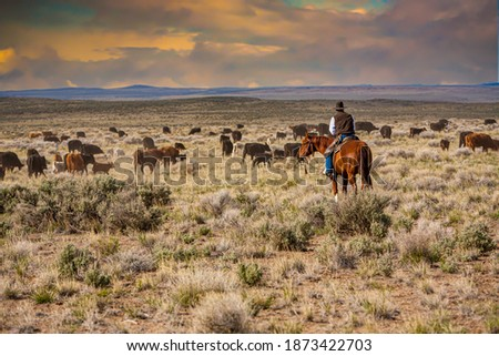 A cowboy riding through a sage brush and  desert grass pasture, moving a herd of cattle from one pasture to another. Royalty-Free Stock Photo #1873422703