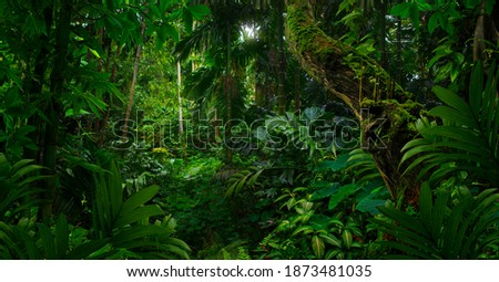 Tropical jungles of Southeast Asia in august Royalty-Free Stock Photo #1873481035