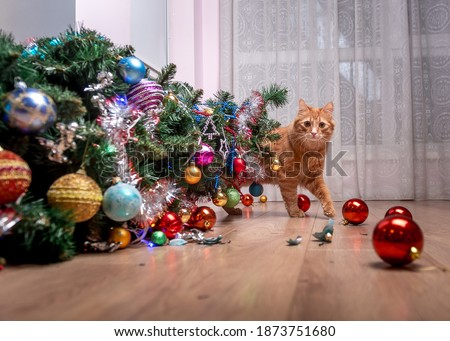 Fault of the pet cat - fallen Christmas tree. Ruins and the end of Christmas. fear of punishment. broken balls on the floor. Ginger cat hide behind the tree Royalty-Free Stock Photo #1873751680