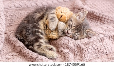 Baby cat sleeps on cozy blanket hugs a toy. Fluffy tabby kitten snoozing comfortably with teddy bear on knitted pink bed. Long web banner with copy space. Royalty-Free Stock Photo #1874059165