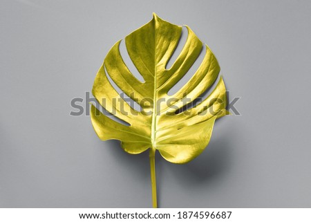Tropical golden leaf of monstera over grey background. Top view, copy space. Minimal summer concept. Demonstrating trendy Color of the Year 2021. Illuminating Yellow and Ultimate Gray.  Royalty-Free Stock Photo #1874596687