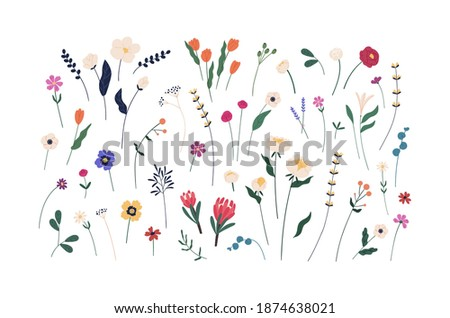 Floral set of beautiful blooming wildflowers and leaves. Botanical collection of cut meadow and garden flowers isolated on white. Elegant spring plants for floristry. Flat vector cartoon illustration Royalty-Free Stock Photo #1874638021