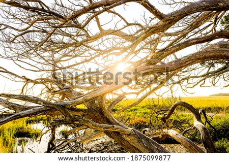 Weathered tree along the lowcountry landscape of the Georgia Coast Royalty-Free Stock Photo #1875099877