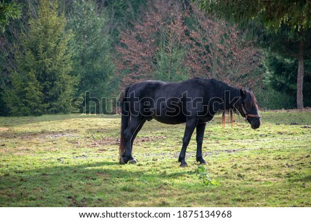 Horse in the nature, horseback riding