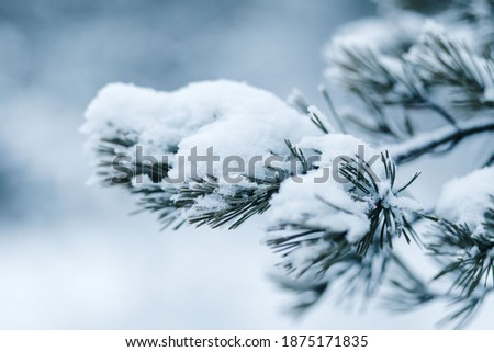 Pine branch under the snow. Blue pine tree under blue snow. Snowy winter. Snowy branch. Snowy forest Royalty-Free Stock Photo #1875171835