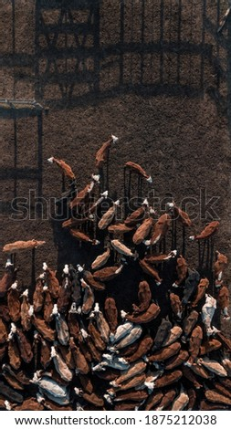 Aerial view of cattle in the corral. Royalty-Free Stock Photo #1875212038
