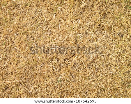 Dying Grass background  #187542695