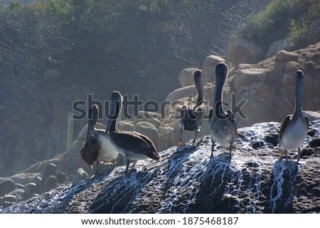 Group of pelicans on rocks, Acapulco Bay, Mexico  Royalty-Free Stock Photo #1875468187