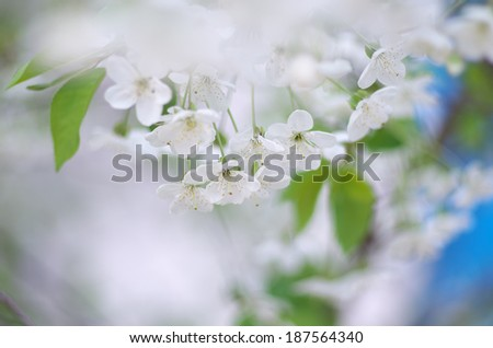 Spring tree flower set. Shallow depth-of-field. #187564340