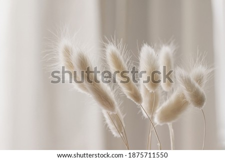 Close-up of beautiful creamy dry grass bouquet. Bunny tail, Lagurus ovatus plant against soft blurred beige curtain background. Selective focus. Floral home decoration. Royalty-Free Stock Photo #1875711550