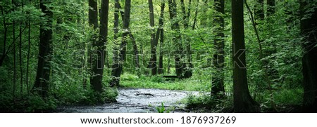 Small river (swamp) in the dark forest. Mighty deciduous trees. Moss, fern, plants, tree logs. Atmospheric landscape. Pure nature, climate, seasons, rainforest. Panoramic view