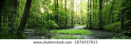 Small river (swamp) in the dark forest. Mighty deciduous trees. Moss, fern, plants, tree logs. Atmospheric landscape. Pure nature, climate, seasons, rainforest. Panoramic view Royalty-Free Stock Photo #1876937815