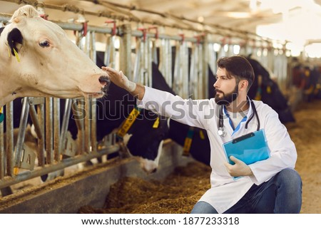 Young veterinarian with clipboard in hand taking care of dairy cows and checking their health during regular monitoring for prevention of cattle diseases and infections on livestock farm Royalty-Free Stock Photo #1877233318